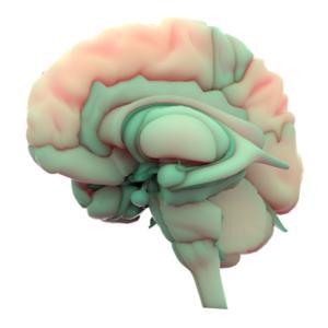 NeurOptimal® Neurofeedback for Anxiety
